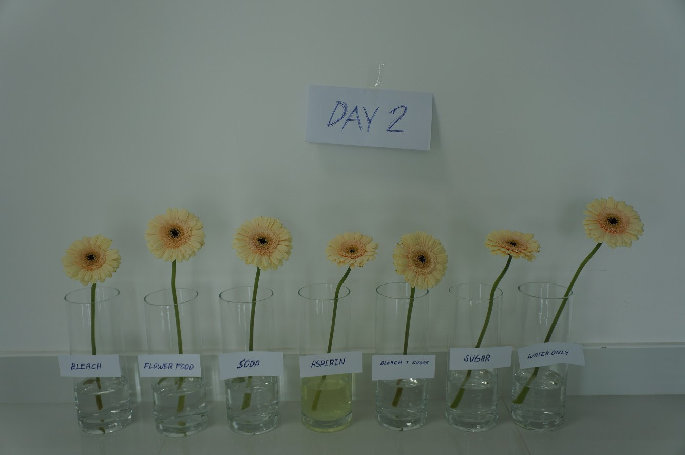 Make flowers last longer day 2