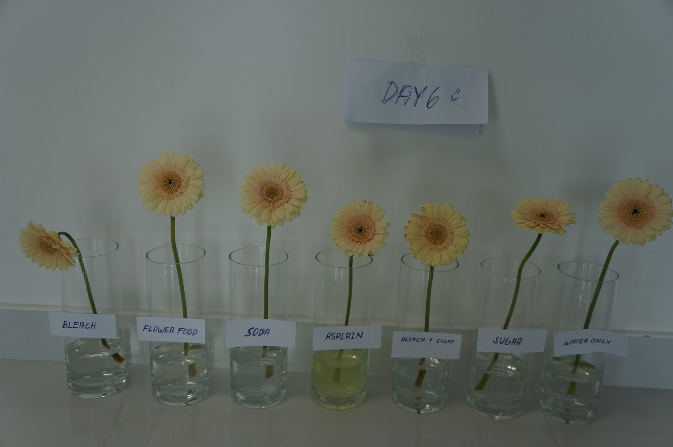 Make flowers last longer day 6
