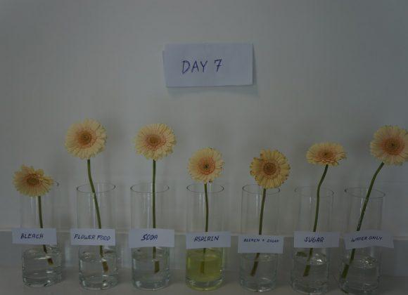 Dubai Flower experiment: How to Make Flowers Last Longer?