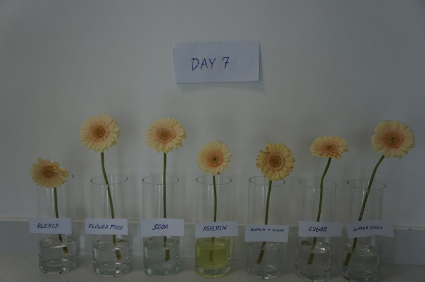 Dubai Flower experiment: How to Make Flowers Last Longer?