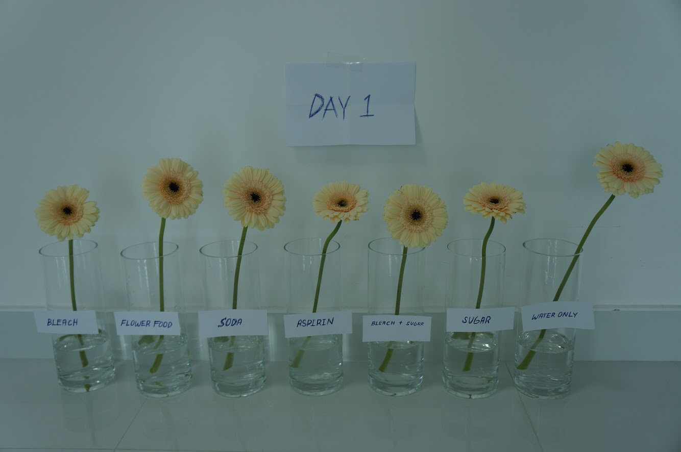 Make flower last longer day 1