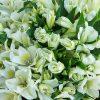Alstromeria Mono Bouquet