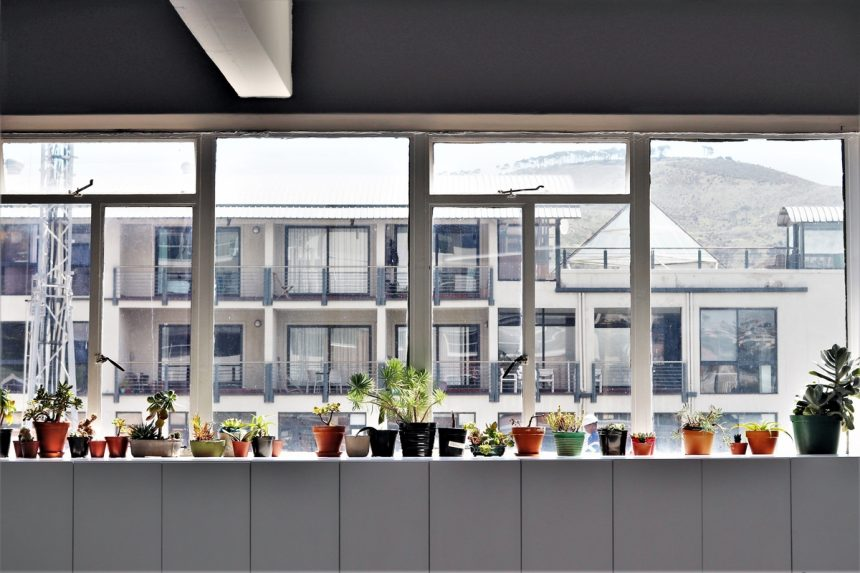 Indoor Plants and Fresh Flowers at Your Office: Is It Only About Beauty?